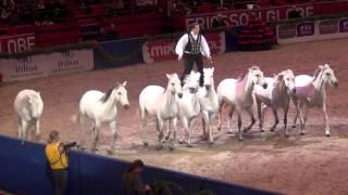 LORENZO'S HORSES @ STOCKHOLM HORSE SHOW 2011; BASSHUNTER