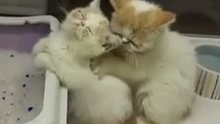 Kitten Massage