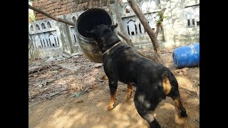 Dog Training in Tamil