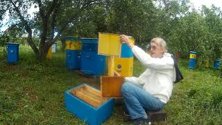 Productive Ukrainian Beehives for Industrial Beekeeping or Weekends (ENGLISH)
