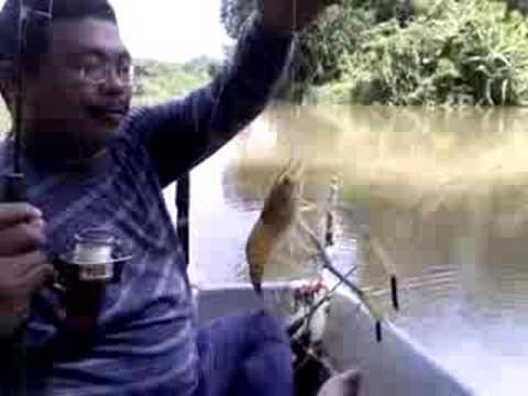 Freshwater Prawns Fishing Memancing Udang Galah