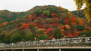 Timelapse HD movie in autumn red color season kyoto