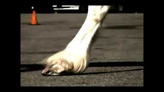 I LIKE THE WAY YOU MOVE- Slow motion movie of the horses hoof