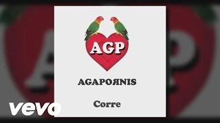 Agapornis - Corre