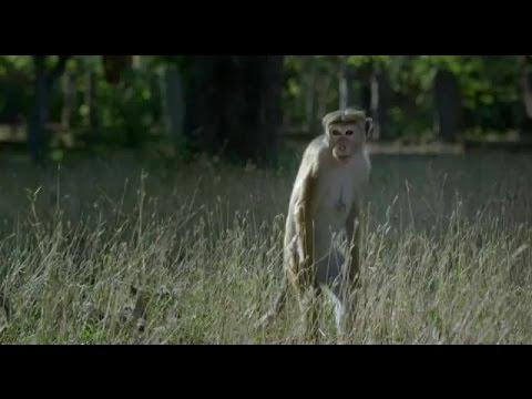 O Reino dos Primatas – assistir completo dublado portugues