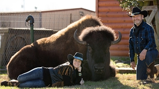 Cowboy Couple Live In House With A Buffalo