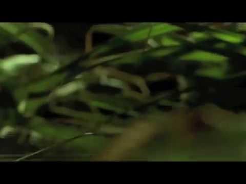 Xxx Mp4 Blue Velvet Blu Ray Trailer 3gp Sex
