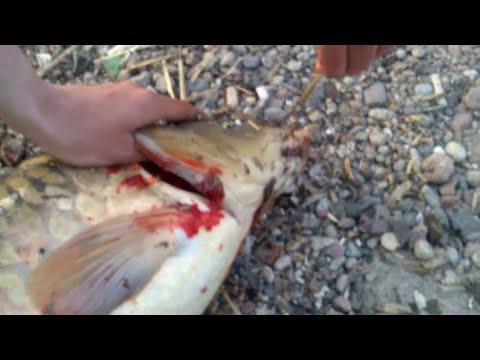 рыбалка на день в минске