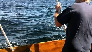 Mackerel Fishing In Norway