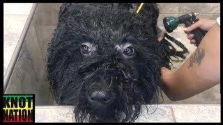 Puli Bath 101 | Washing Dog Dreadlocks at Pet Value
