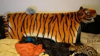Bengalstica Lesson 1 How to approach dangerous prey