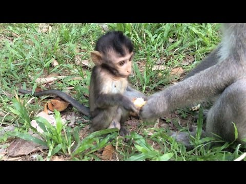 The mother monkey grabbed food her baby monkey
