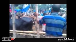 Banani Kakoli  Haatt-2014 By - Zebrul Hossain - Bangladesh er Gorur Haatt