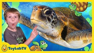 TURTLES RESCUED FROM SHARK ATTACK! First Pet Baby Turtle IRL Family Fun Event Kids Video w/ Toys