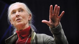 What separates us from chimpanzees? | Jane Goodall