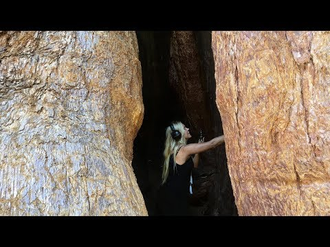 Xxx Mp4 Deya Dova Recording In A 3000 Year Old Tree Free Download 3gp Sex