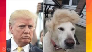 Haters Gonna Hate!   Donald Trump's Most Funny Pictures   YouTube