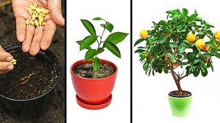 15 PLANTS YOU CAN EASILY GROW IN YOUR OWN KITCHEN