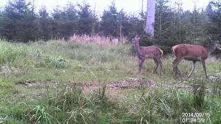HD-Videos mit der ALDI Wildkamera WK3