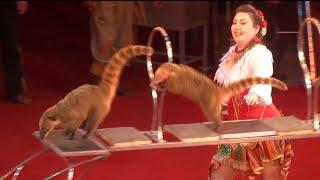 Circus. The show of different animals. Цирк. Шоу разных животных.