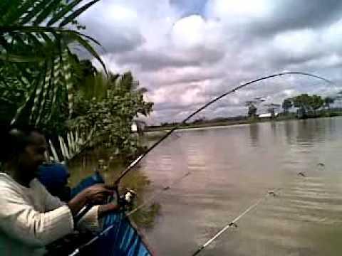 Trip air tawar memancing udang galah di muara kembang