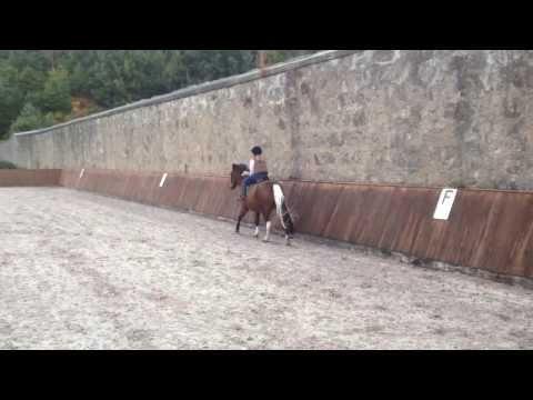 Xxx Mp4 Erin Horse Riding Xxx 3gp Sex