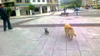 como orion enseña a lola a cruzar la calle.3gp