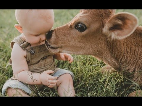 Xxx Mp4 Babies And Baby Cow Become Friends Funny Babies And Pets Compilation 3gp Sex