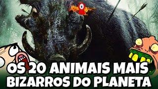 OS 20 ANIMAIS MAIS BIZARROS DO PLANETA #2 😱