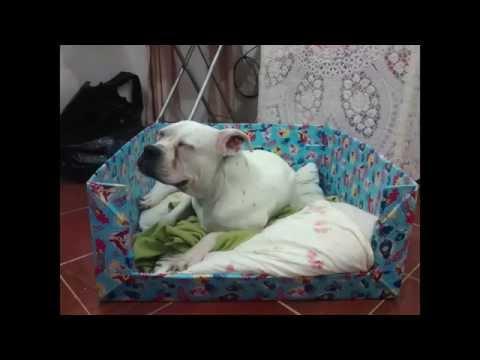 como hacer una cama para mascotas con material de reuso