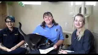 America talk show Animals Talk on The TSDnetwork