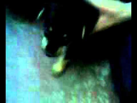 Comendo a cachorra