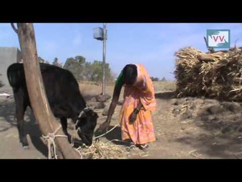 Drought-hit village in Maharashtra receives no Govt help