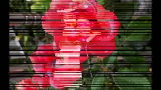 sonido mazter   toma esta flor