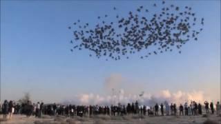 Kembang Api Siang Hari Terdahsyat & Terbesar di Dunia