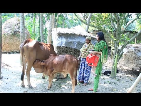 Xxx Mp4 Cow 39 S Milk Beautiful Girl Tow Girl Village Girl Dorojati Kholo 3gp Sex
