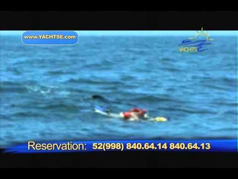 Xxx Mp4 Whale Shark2 HD 720 Hi 3gp Sex