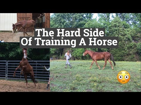 Xxx Mp4 The Hard Side Of Training A Wild Horse 3gp Sex