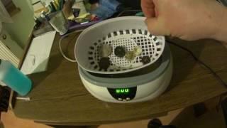 Myjka ultradźwiękowa. Czyszczenie monet-guzików.