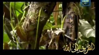 Asma Allah ul-Husna - Mishary Al-Afsay