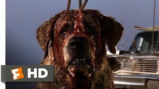 Cujo (7/8) Movie CLIP - Donna Is Bitten (1983) HD