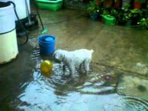 perro champiñon mojado lluvia 00000[1].3gp