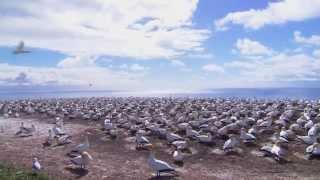 Short wildlife video clip HD