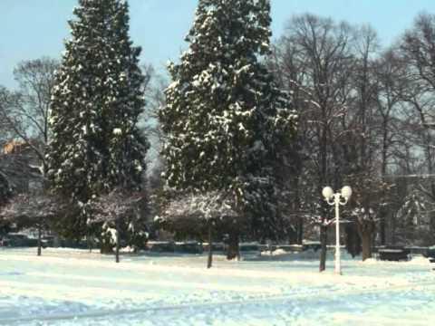 Dalmatino - Božić bijeli