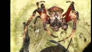 ১০০  ওরাল সেক্সে -2 Gigantic female Darwin14 times larger than males force mates to perform oral sex