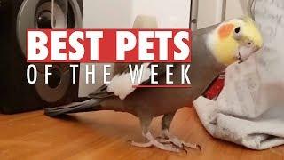 Best Pets of The Week   September 2017 Week 2