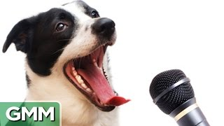 6 Animals Who Can Speak Human