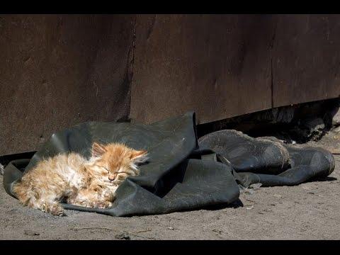Что делать если нашли бездомного котенка 184