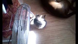 Kitty love, cuteness overload, running circle, fun