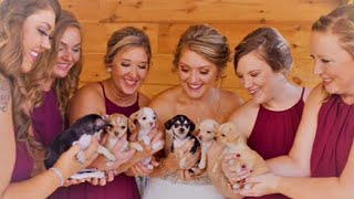 Bridesmaids Carry Rescue Puppies Instead of Flowers While Walking Down the Aisle
